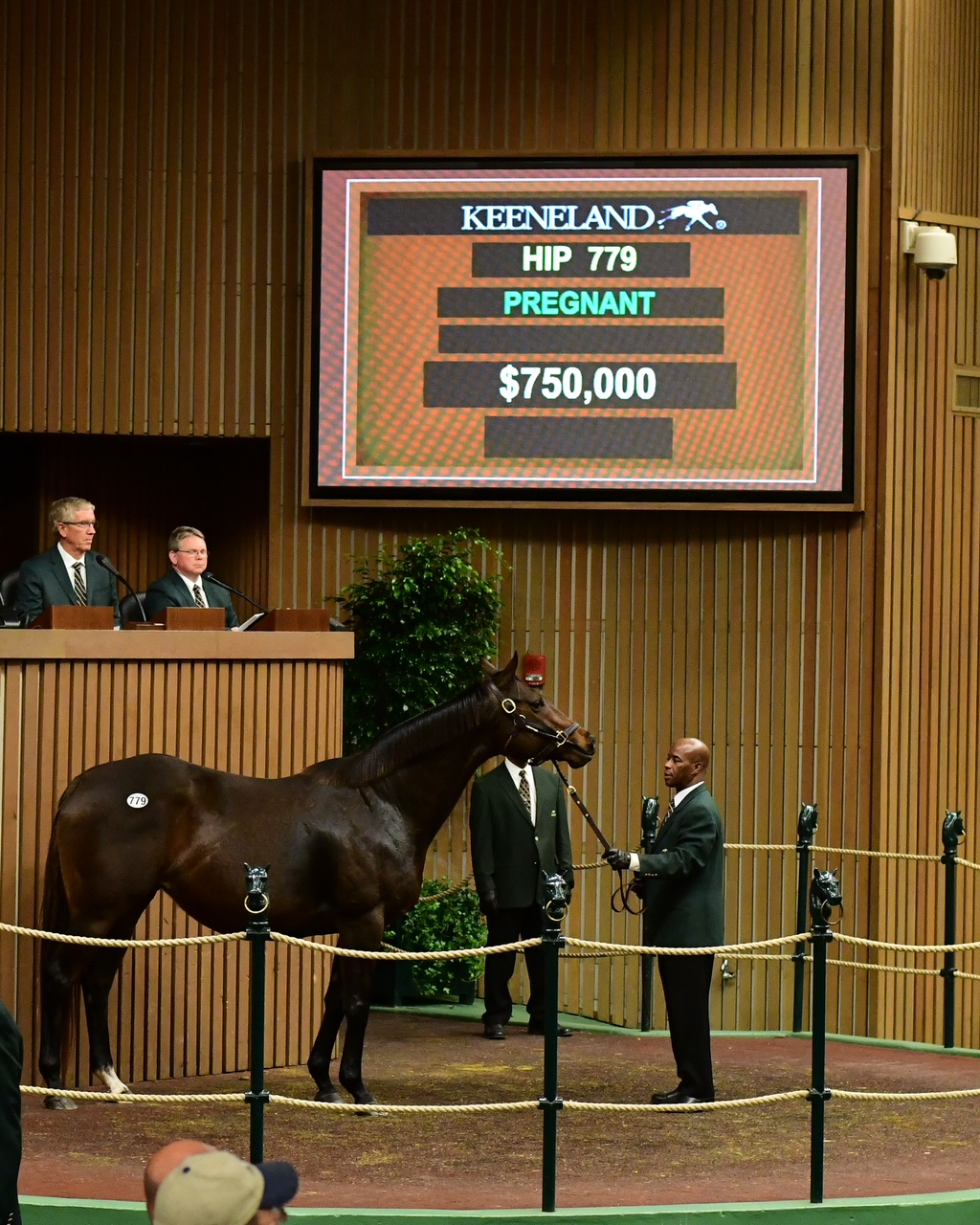 $750,000 Distorted Humor Mare Leads Vibrant Tuesday at Keeneland ...