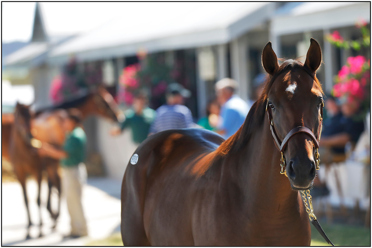 9 Interesting Notes About The Keeneland September Yearling