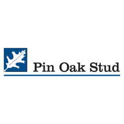 Pin Oak Stud