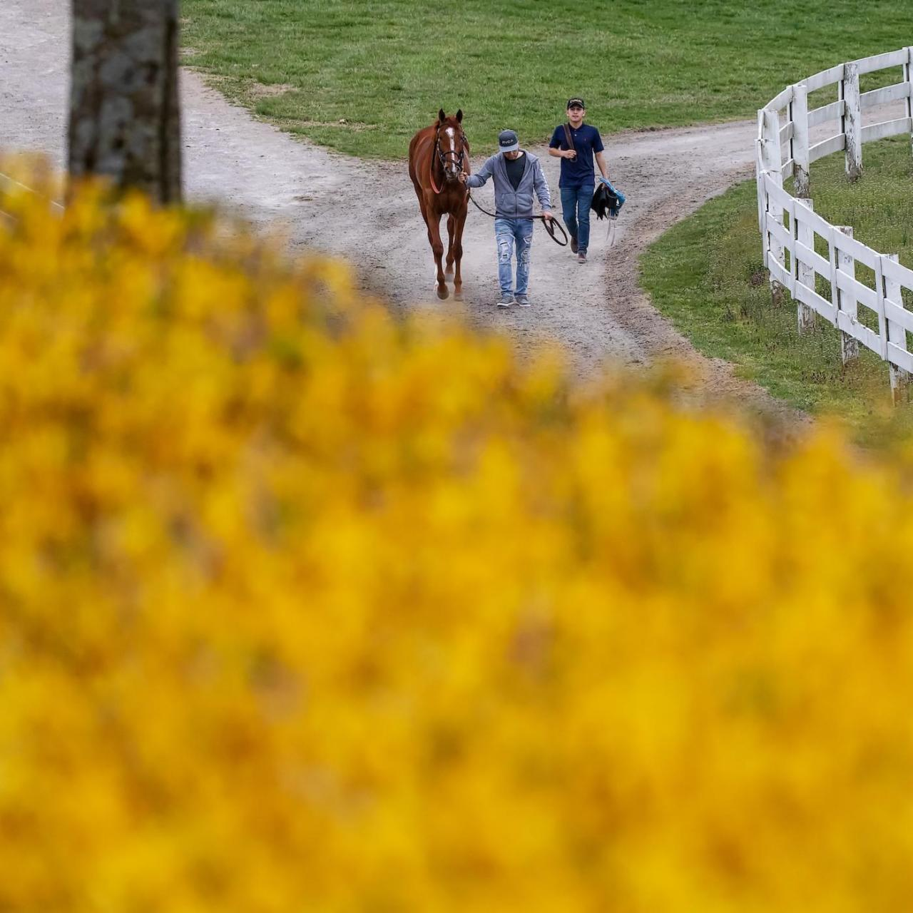 Keeneland Backstretch