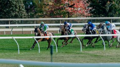Fall Meet Racing Image