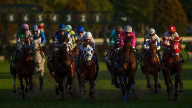 Fall Stakes Schedule