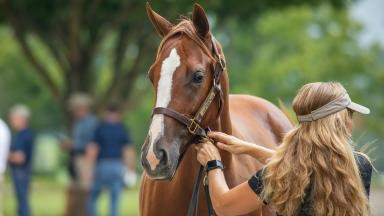 September Yearling Sale