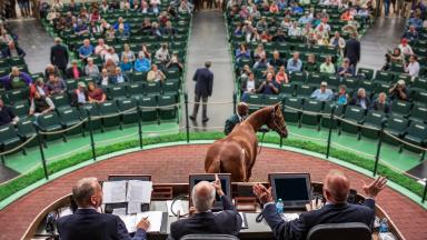 World's Yearling Sale