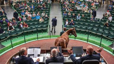 Overhead in the Keeneland sales pavilion